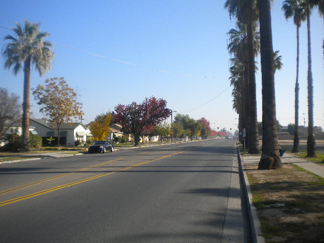 Fresno's ubiquitous row of palm trees