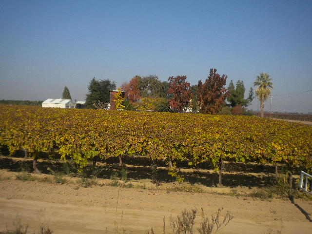 A vineyard and a farmer's home