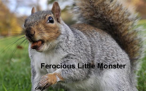 Ferocious Little Monster